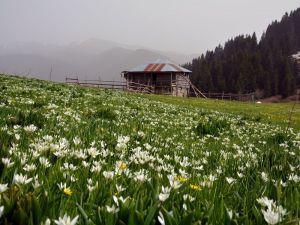 Karadeniz Yaylalarında Bahar Güzelliği