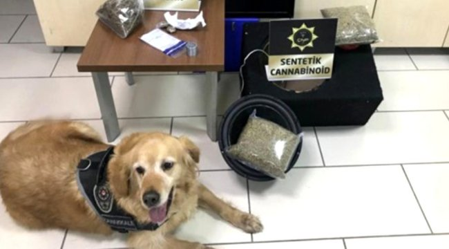 Narkotik köpeği 2 kilogram uyuşturucu buldu