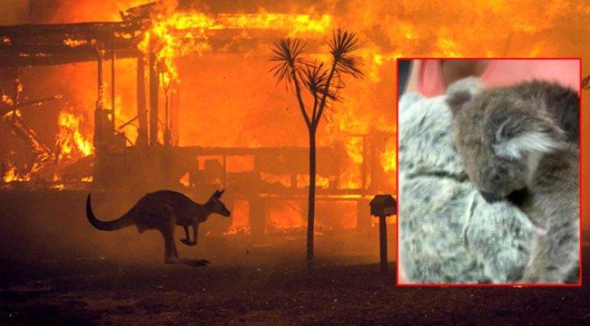Avusturalya'da İç acıtan olay! Oyuncak Ayıyı Annesi Sandı!