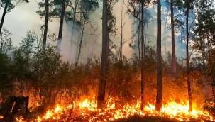 Son dakika ! Trabzon'da örtü yangını !